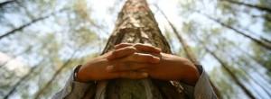 Το αγκάλιασμα των δέντρων βοηθά στην καλύτερη υγεία του ανθρώπου!