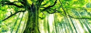 Τίποτα δεν είναι πιο ιερό, από ένα δέντρο