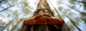Η αγκαλιά του δέντρου