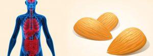 Αυτό θα συμβεί στο σώμα σας εάν τρώτε 12 αμύγδαλα κάθε μέρα.