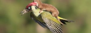 Όταν τα ζώα βοηθούν αλλά ζώα. Συγκλονιστικό βίντεο