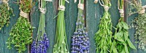 Τα βότανα της ευτυχίας