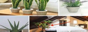 Βάλτε αυτά τα 10 φυτά στο υπνοδωμάτιό σας για να κοιμάστε καλύτερα και να καθαρίσετε τον αέρα που αναπνέετε!