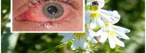 Βότανο βελτιώνει την όραση ακόμα και σε άτομα άνω των 70 ετών