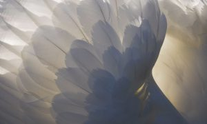 7-simadia-oti-enas-angelos-vriskete-sto-plevro-sas-afti-ti-stigmi