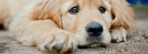 Δικαίωμά σου να μη συμπαθείς τα ζώα, υποχρέωσή σου να τα σέβεσαι