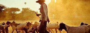 Ο Βούδας και ο αγρότης με τα 83 προβλήματα