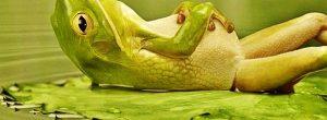 Ο κουφός βάτραχος και οι άλλοι