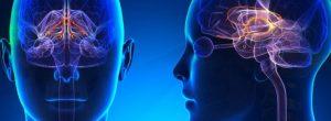 Πως να Αυξήσετε τα Επίπεδα Ντοπαμίνης στον Εγκέφαλό σας