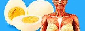 9 πράγματα που θα συμβούν στο σώμα σας αν αρχίσετε να τρώτε 2 αβγά κάθε μέρα