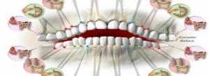 Κάθε Δόντι είναι Συνδεδεμένο με Ένα Όργανο του Σώματος – Ο Πόνος στα Δόντια Μπορεί να είναι Ένδειξη Ασθένειας