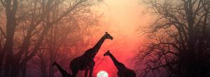 Δώσε χρόνο στην ψυχή σου να σε φτάσει: Μια όμορφη αφρικανική ιστορία