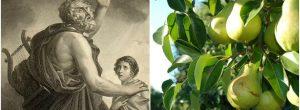 Το φρούτο που ο Όμηρος ονόμαζε  «Δώρο Των Θεών» και μας προστατεύει από 6 ασθένειες
