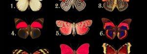 Η πεταλούδα που θα διαλέξεις, αποκαλύπτει τα συναισθήματα και τις σκέψεις που κρύβεις μέσα σου