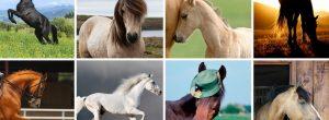 Ποιο άλογο σας αρέσει περισσότερο; Διαλέξτε ένα και δείτε τι λέει για την τύχη σας!