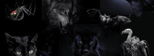Διαλέξτε ένα ζώο και θα σας αποκαλύψουμε την σκοτεινότερη πτυχή της προσωπικότητας σας