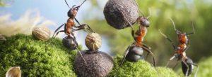 Η απίστευτη φιλοσοφία των μυρμηγκιών για τη ζωή!