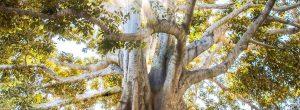 Το δέντρο των ευχών, μια εξαιρετική ιστορία του Όσσο