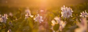 Αγάπη είναι ο ήλιος για το προσωπικό σου λουλούδι