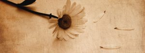 Να μη φοβάστε τη μοναξιά αλλά τις αδιάφορες σχέσεις