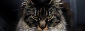 Γιατί οι γάτες είναι πνευματικοί προστάτες