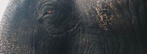Το λιοντάρι και ο ελέφαντας: Δεν χρειάζεται να δώσεις καμιά απάντηση αν δεν θέλεις..