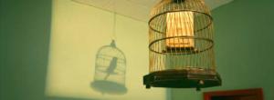 Το πουλί που γεννήθηκε στο κλουβί νομίζει ότι το πέταγμα είναι αρρώστια!