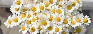 Τα φρέσκα λουλούδια στο σπίτι μειώνουν το στρες και τον πόνο