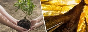 Έρευνα: Αν φυτέψουμε τρισεκατομμύρια δέντρα, ίσως και να σώσουμε τον πλανήτη μας
