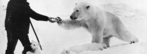 Ο άνδρας ταΐζει την πολική αρκούδα την ώρα που το μικρό της τον αγκαλιάζει με τρυφερότητα.