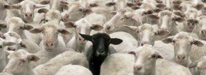 Μη σταματάς. Δεν είναι το μαύρο πρόβατο διαφορετικό, τα άλλα είναι όλα ίδια…