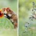 Ώρα για λίγη ομορφιά: 13 μαγικές στιγμές με ζώα που περνούν καλά στη φύση
