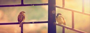 Δεν μου αρέσουν τα πουλιά σε κλουβιά, έστω και αυτά με χρυσά κάγκελα.