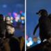 Φωτογράφος απαθανατίζει τη στιγμή που δύο πιγκουίνοι που έχασαν τα ταίρια τους κοιτούν μαζί τα φώτα της πόλης