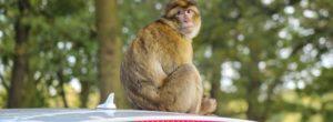 Ινδία: Μαϊμούδες, αδέσποτα και άγρια ζώα πήραν τον έλεγχο στους έρημους δρόμους
