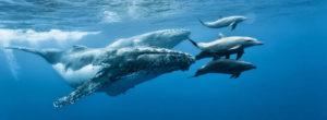 Αυτή η εποχή της καραντίνας των ανθρώπων έγινε ζωτική για τα πλάσματα της θάλασσας – Τι λένε ειδικοί για την Ελλάδα
