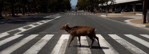 Απίστευτες εικόνες σε όλο τον κόσμο: Αγρια ζώα μέσα στις πόλεις!