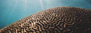 Η επίδραση της σκέψης στην υγεία και στο σώμα