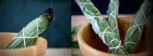 Πως να καθαρίσετε τον χώρο σας με φασκόμηλο | Τελετουργία