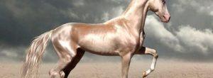 Το σπάνιο άλογο που θεωρείται το ωραιότερο στον κόσμο. Μοιάζει σαν να είναι από χρυσάφι…