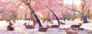 Ελάφια απολαμβάνουν τις ανθισμένες κερασιές στο πάρκο της Νάρα στην Ιαπωνίας