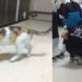 Αδέσποτη γάτα πήγε το άρρωστο μικρό της στα επείγοντα του νοσοκομείου – και της το έσωσαν!